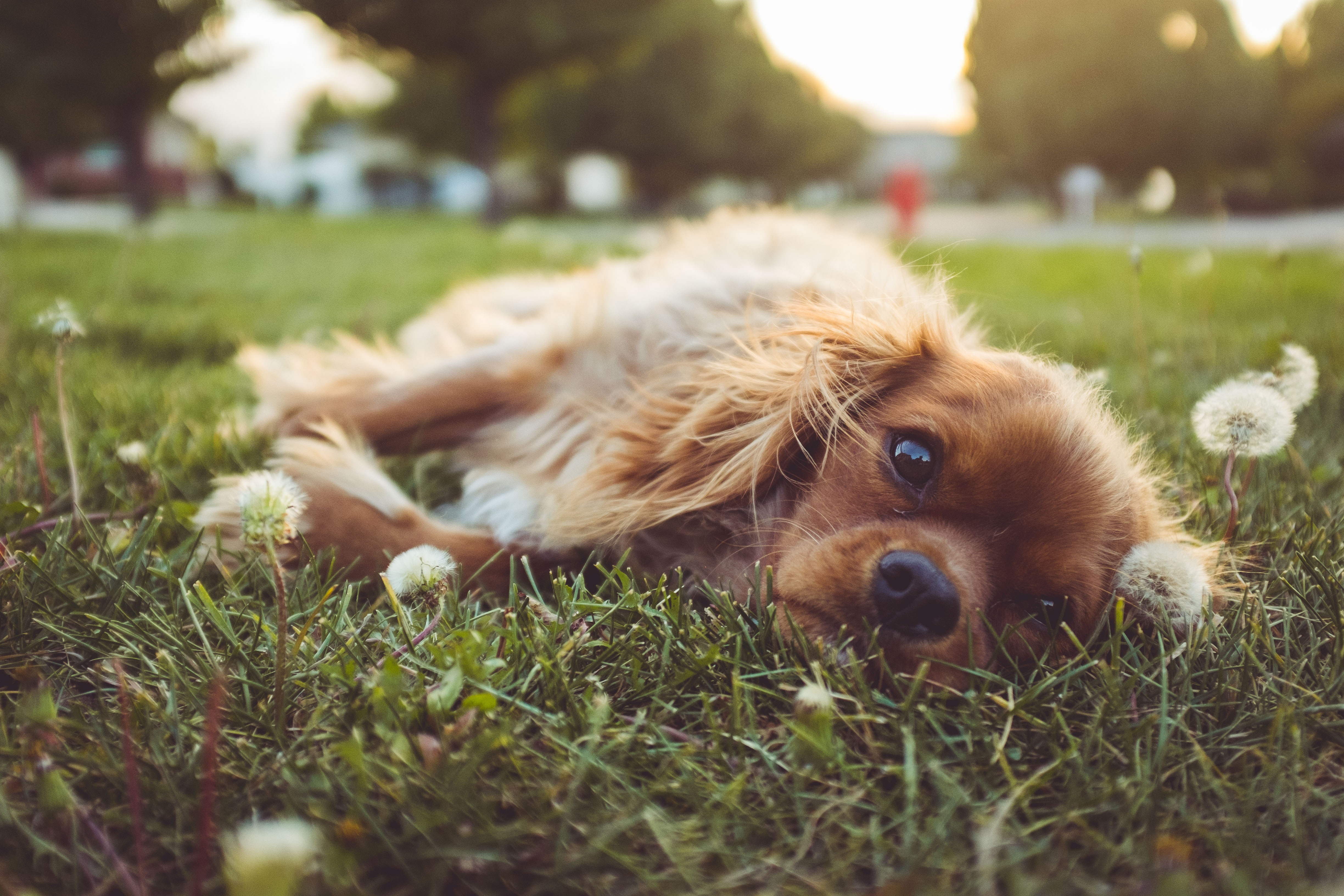 Image: puppy lying on grass surrounded by floating bubbles